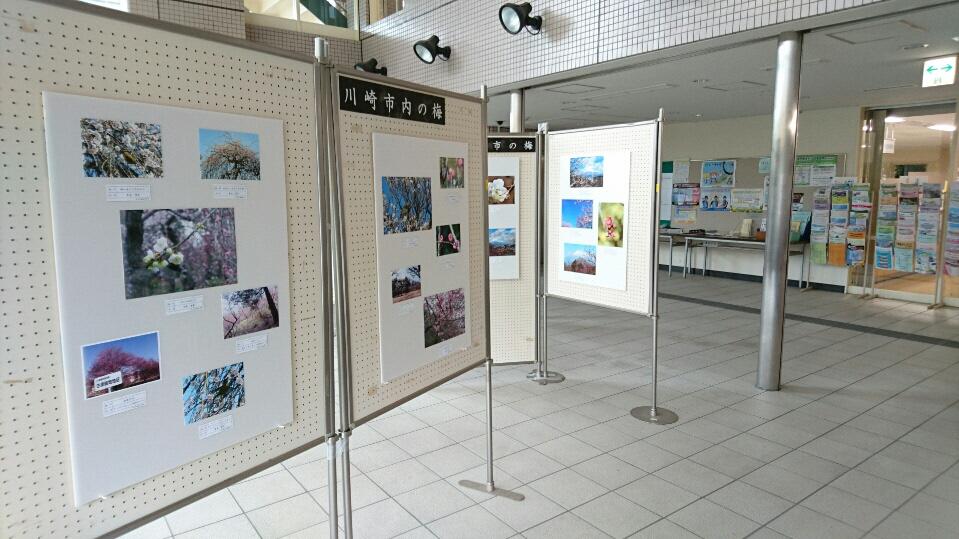 日吉出張所タウンホールやまぶきに展示の様子
